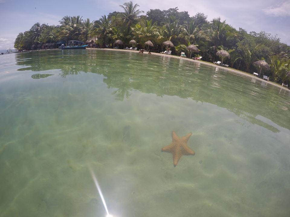 playa-de-las-estrellas-bocas-del-toro