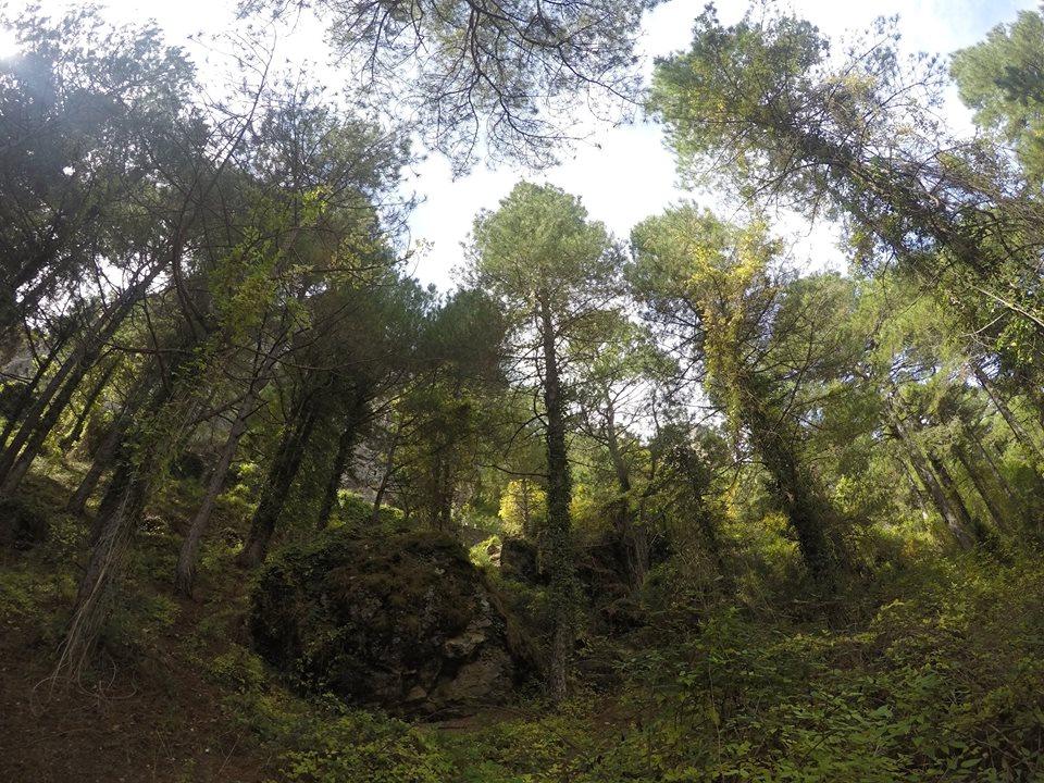 bosque-del-rio-mundo