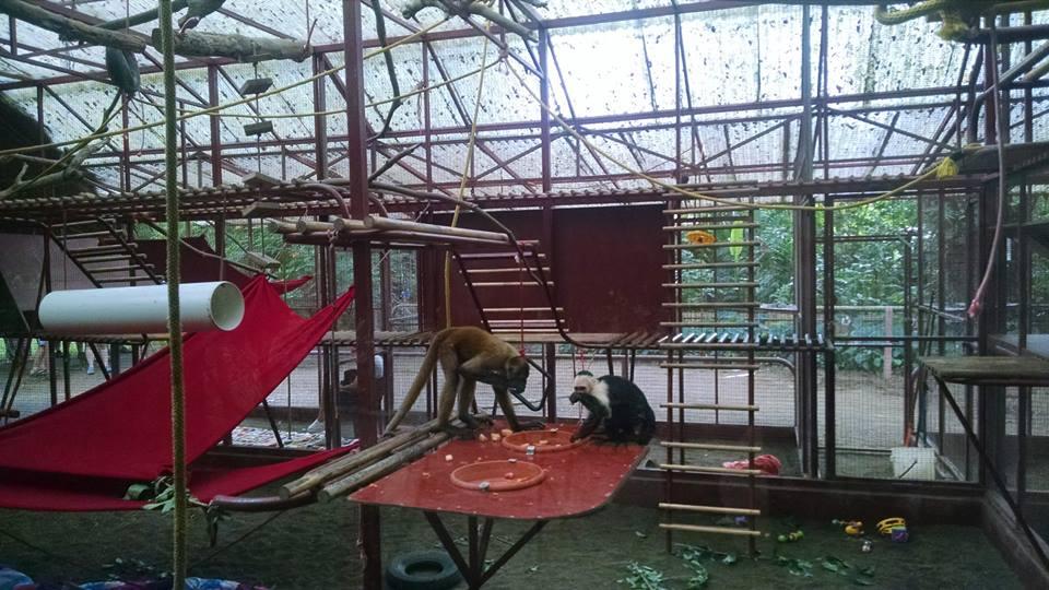 recinto-de-primates-centro-de-rescate-jaguar