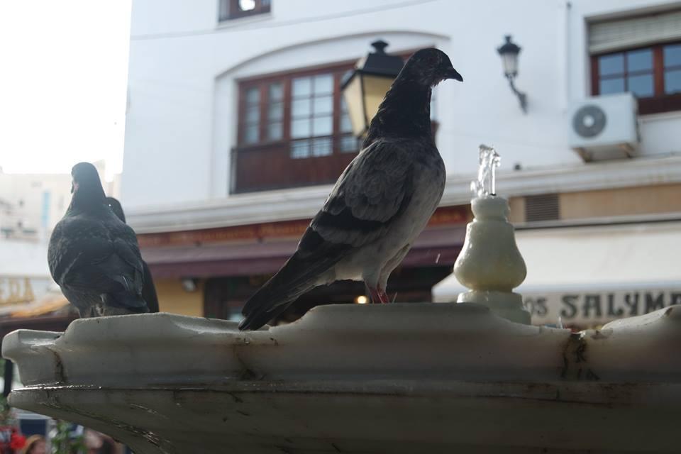 plaza-de-la-victoria-centro-historico-de-marbella