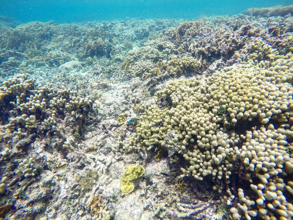 Snorkel entre el coral, Nalunega, San Blas