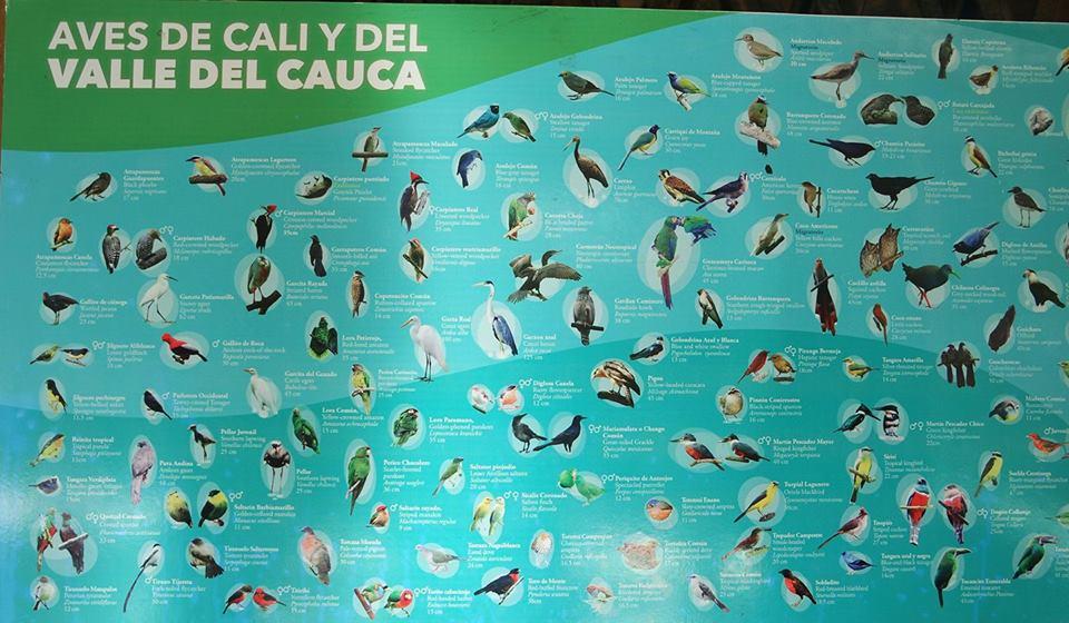 Aves de Cali y del valle del Cauca