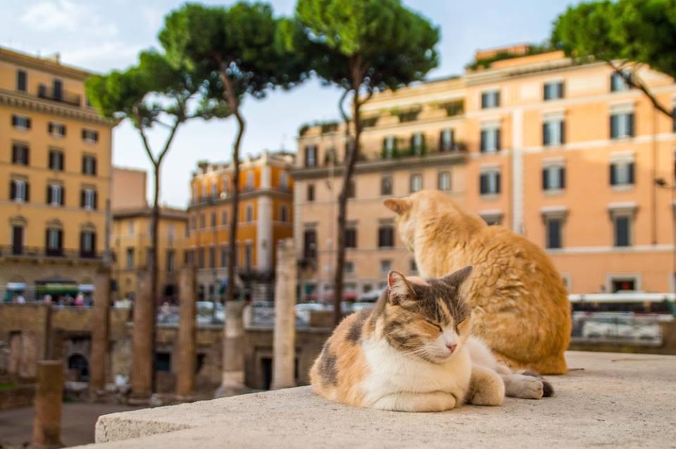 Torre Argentina, Roma, guardería de gatos