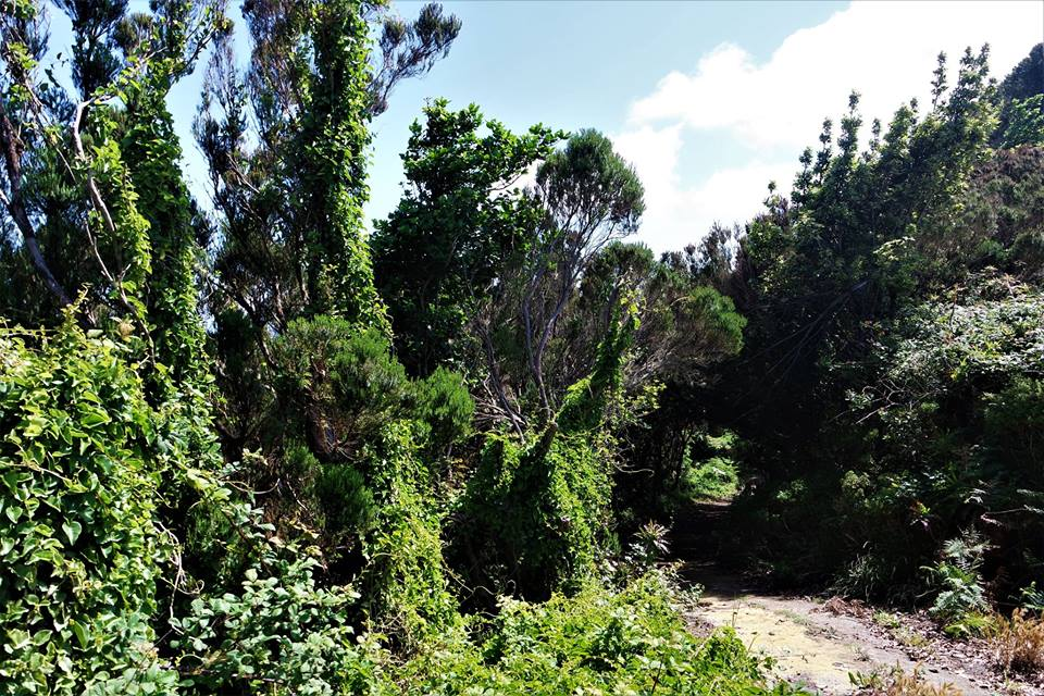 Anaga, el bosque de Laurisilva