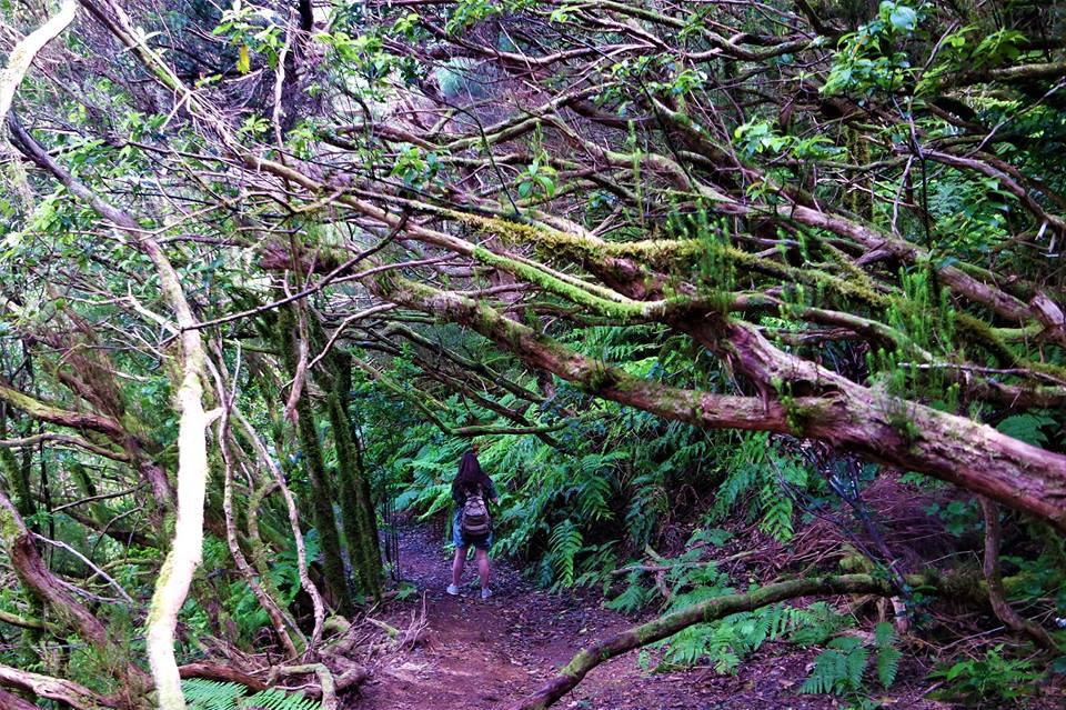 El bosque encantado de Anaga en Tenerife