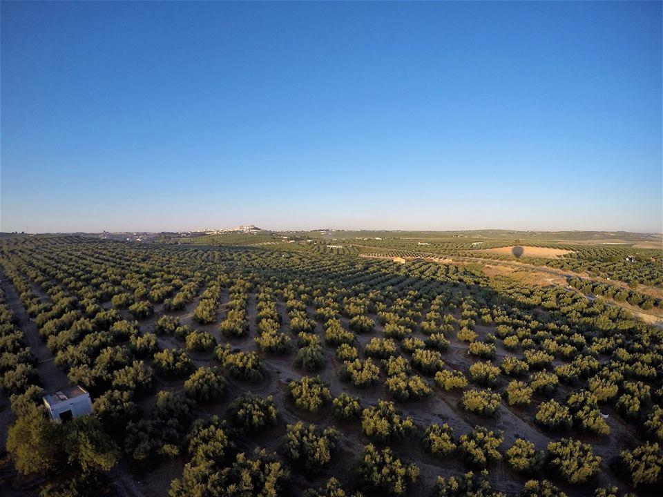 Qué ver en Montilla, olivares.