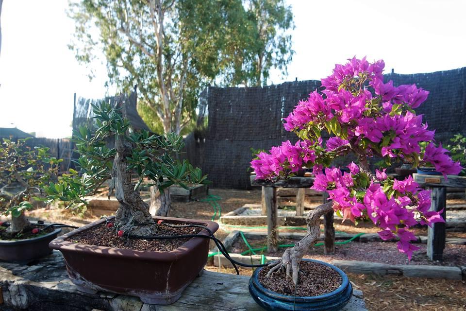 Jardín de bonsais
