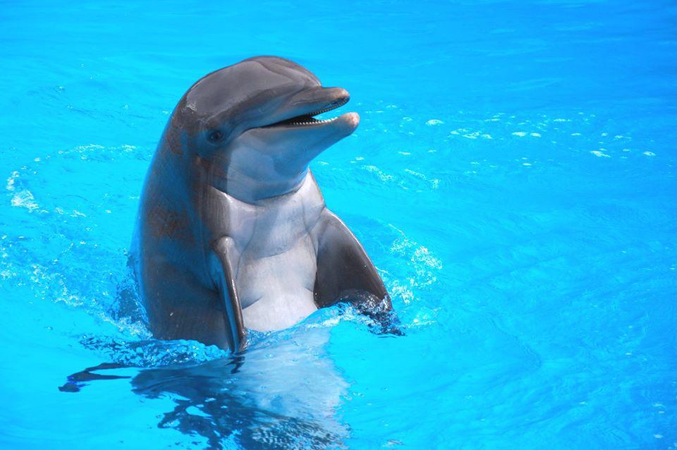 La triste e increíble historia del delfín suicida