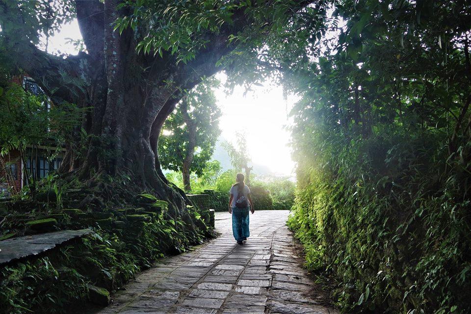 Higueras sagradas, Bandipur