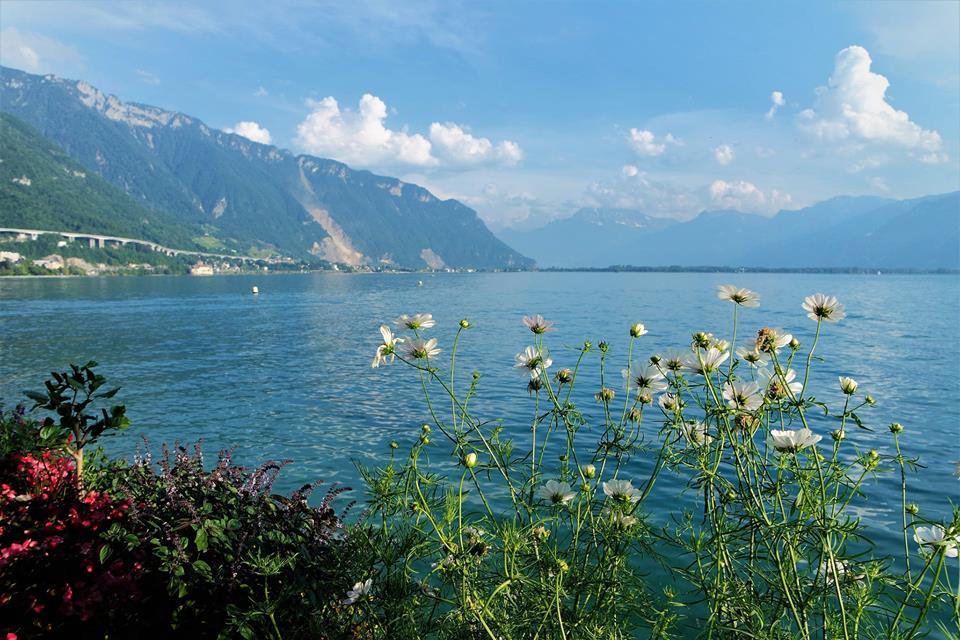 Paseo de las Flores, Montreux