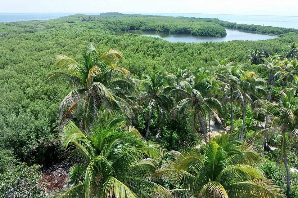 Hojas de palma, Isla Contoy