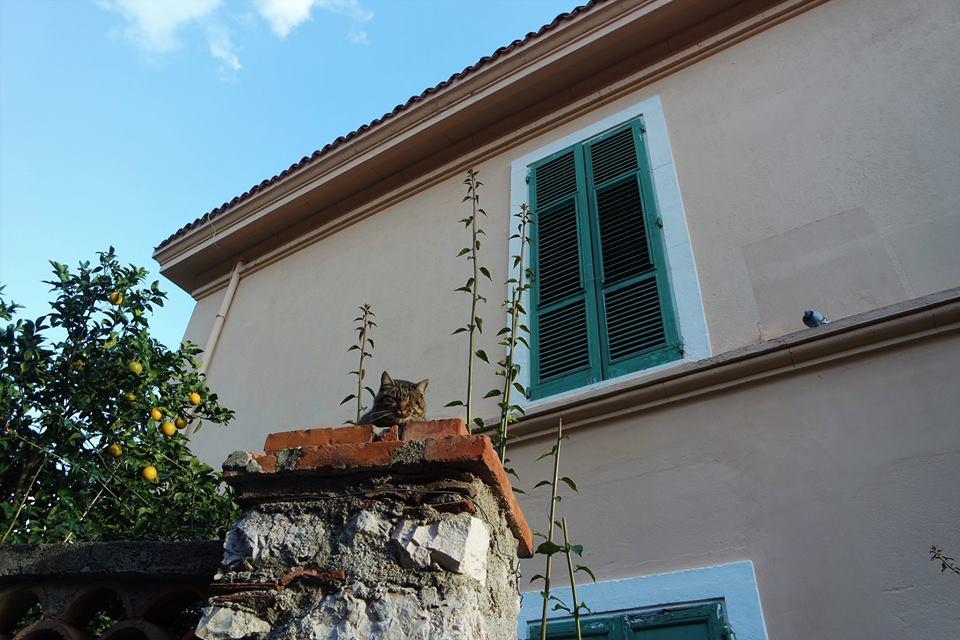 Gato, Taormina