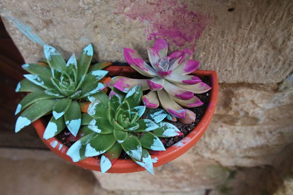 Plantas, Sos del Rey Católico