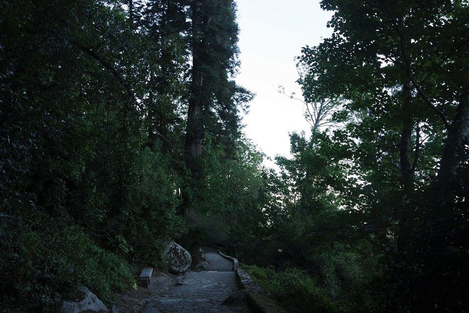 Bosques de Sintra
