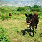 Ruta por el valle de Lecrín Granada