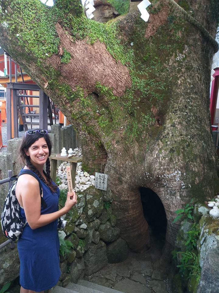 Árbol sagrado de Kumano Nachi Taisha