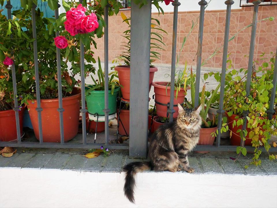 Gatos de Montefrío