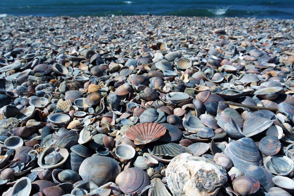 Playa de las Azucenas en Motril