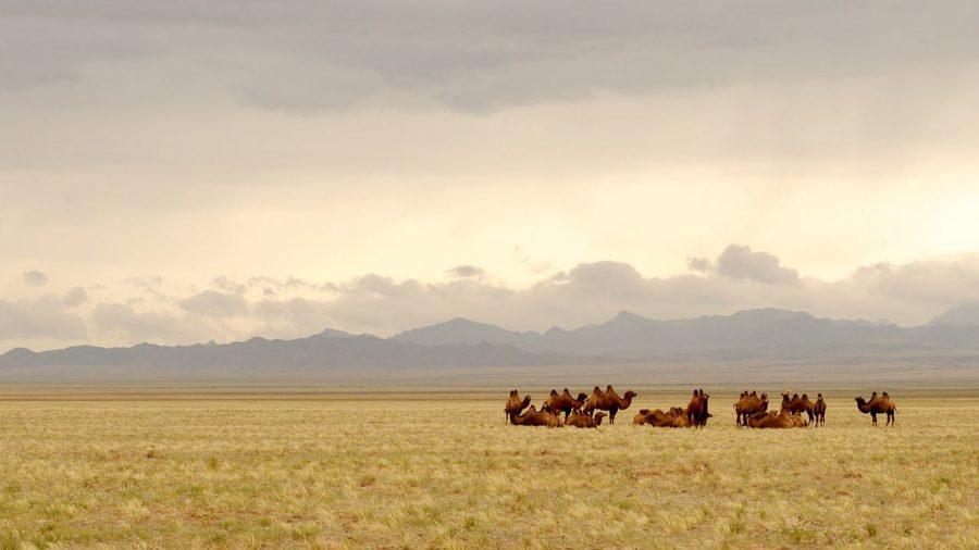 Desierto del Gobi, Mongolia