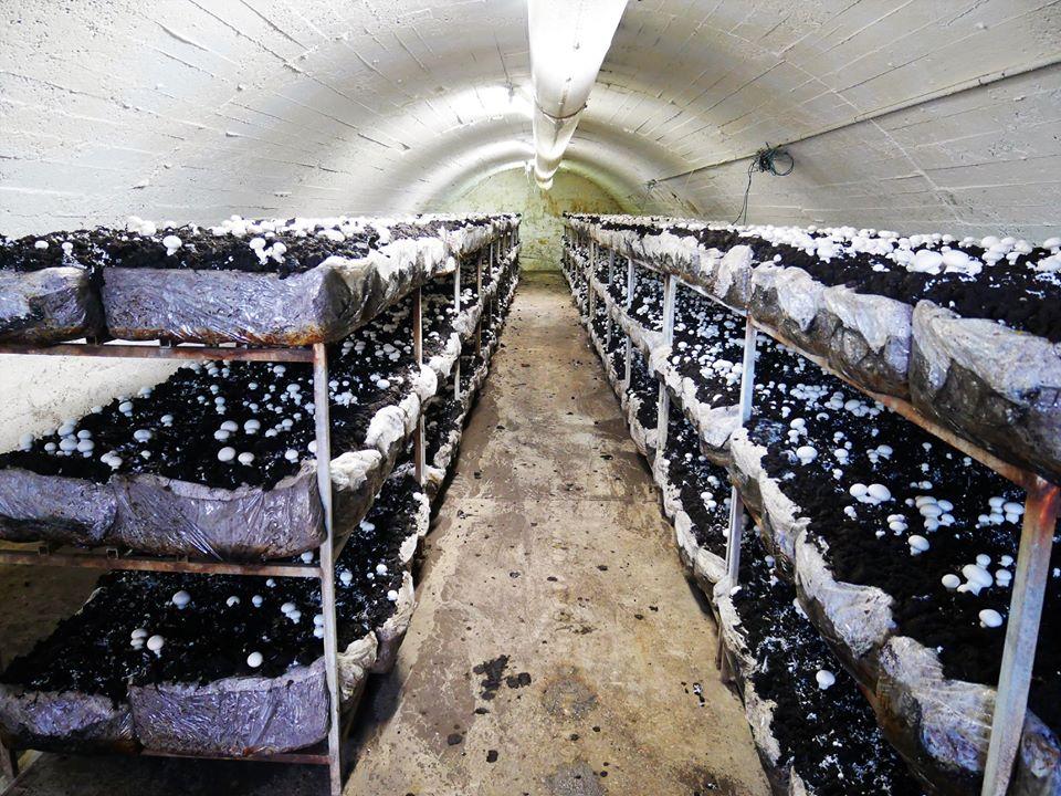 Fungiturismo en La Rioja