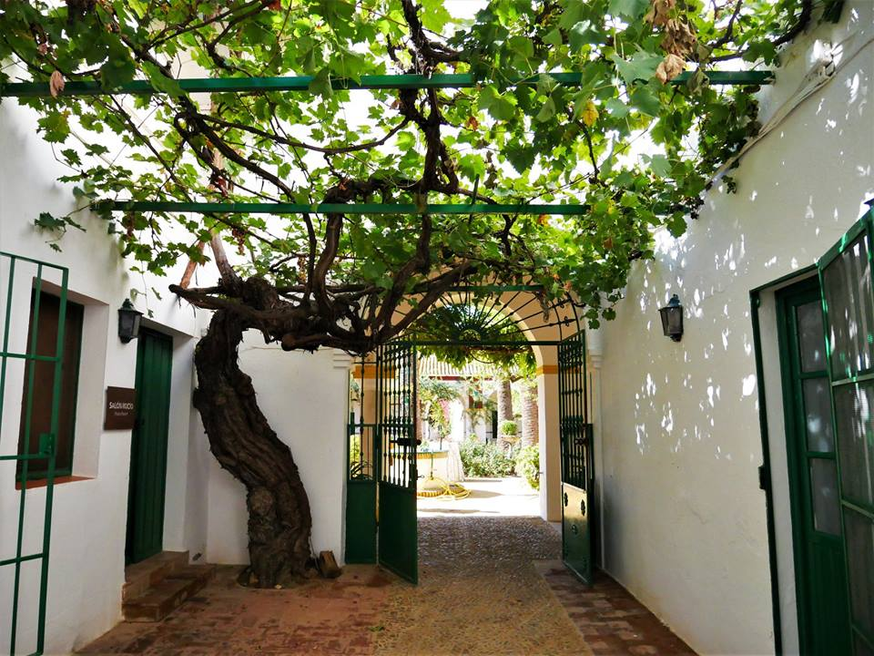 Patio, Hacienda Guzmán