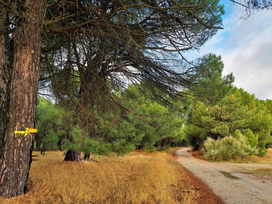 Etapa 1, Camino de Madrid a Santiago