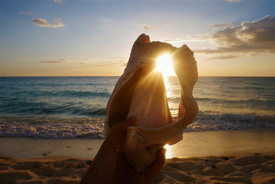 Caracola de mar - República Dominicana - 10 islas para un verano inolvidable