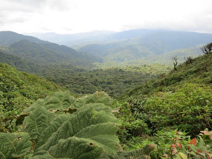 Bosque nuboso de Monteverde, qué ver en Costa Rica
