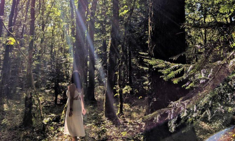 El bosque de Broceliande en la Bretaña francesa