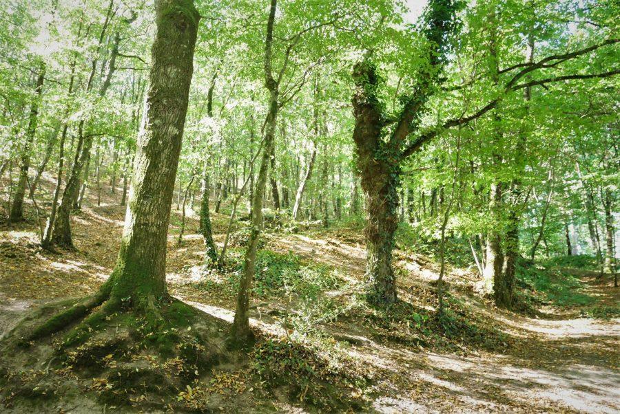 Final de verano en el bosque de Broceliande