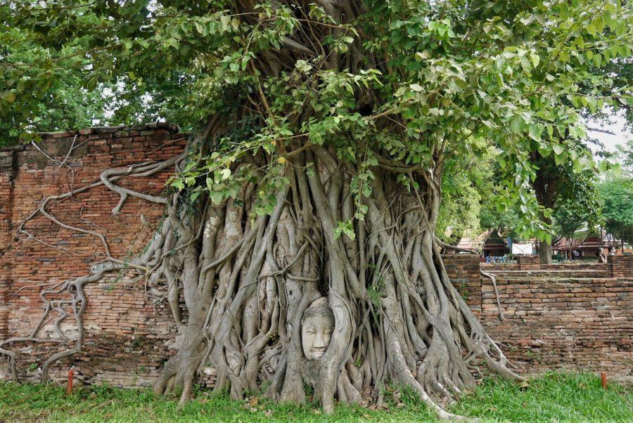 El Buda de las Raíces, Ayutthaya, ruta de 15 días por Tailandia