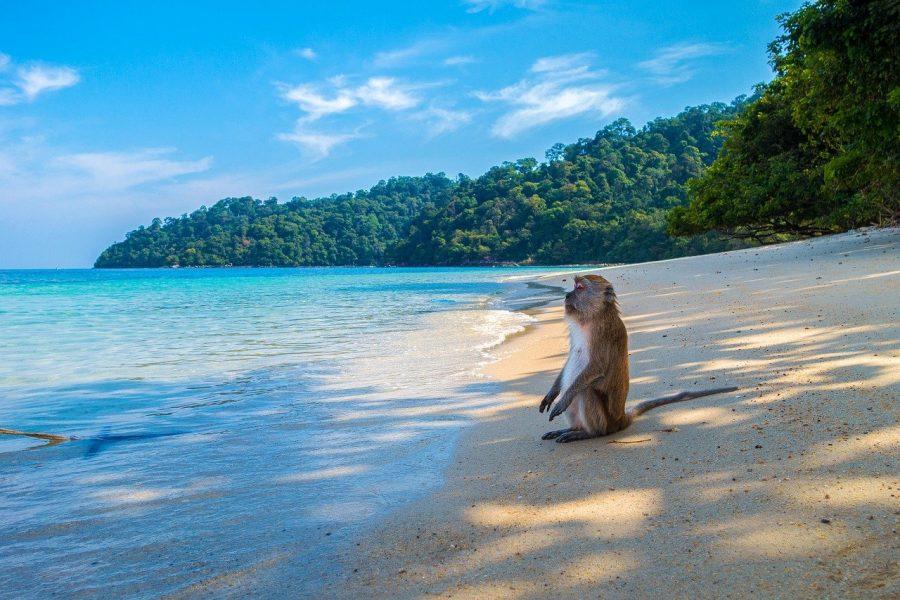 Mono en la playa