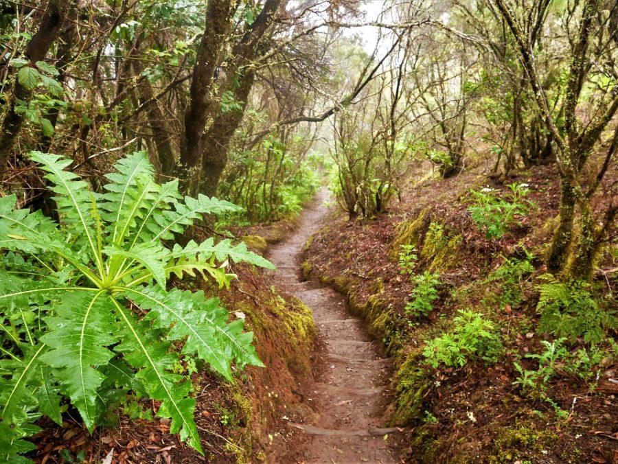 Parque de Garajonay, leyendas de Canarias