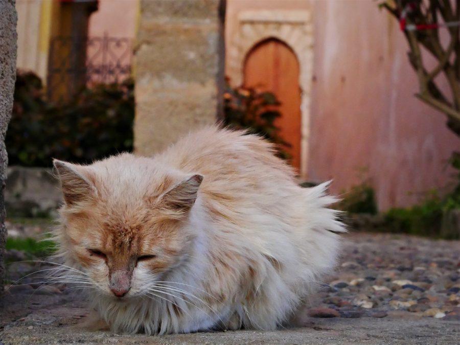 Gato en los Jardines Andalusíes, Rabat