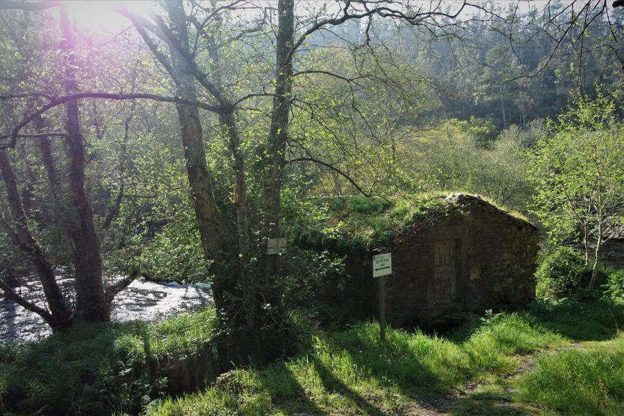 Visita al Refugio de Verdes en Galicia
