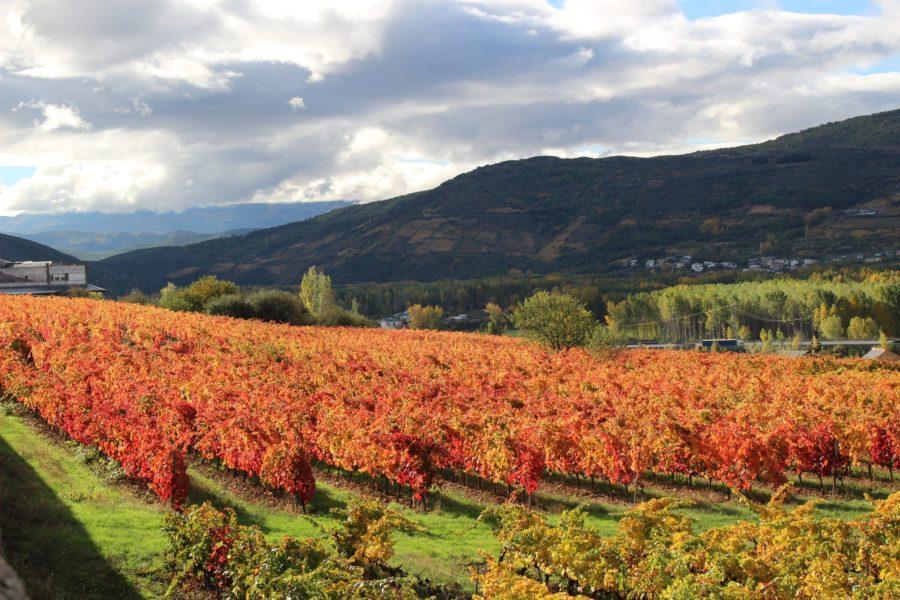 Viñedos de El Bierzo en otoño