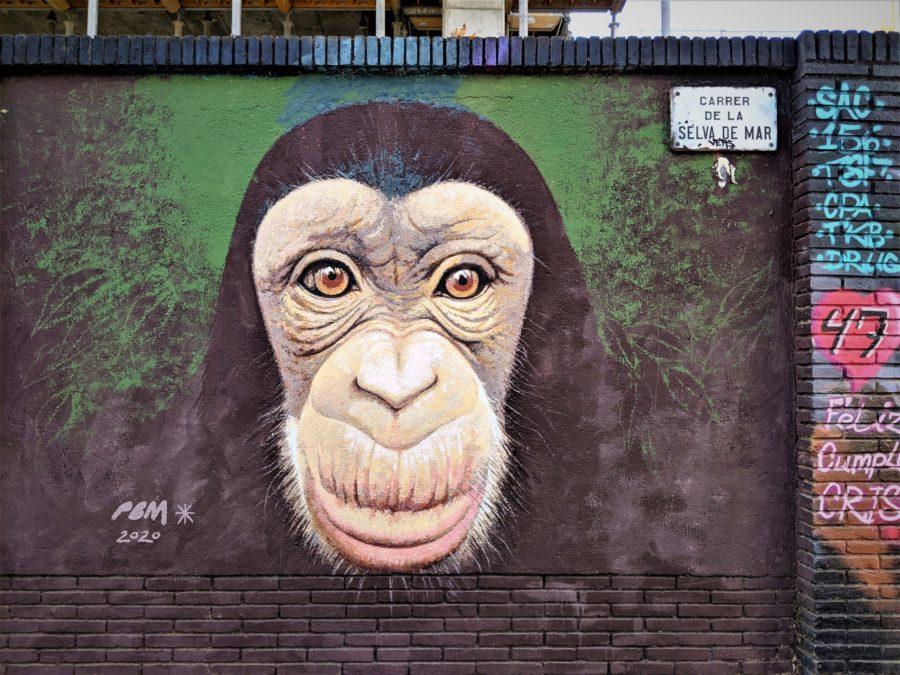 Mono de la Selva de Mar, Poblenou