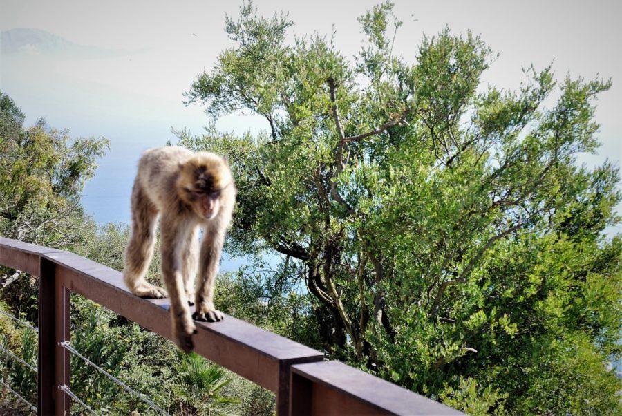 Mono en el mirador