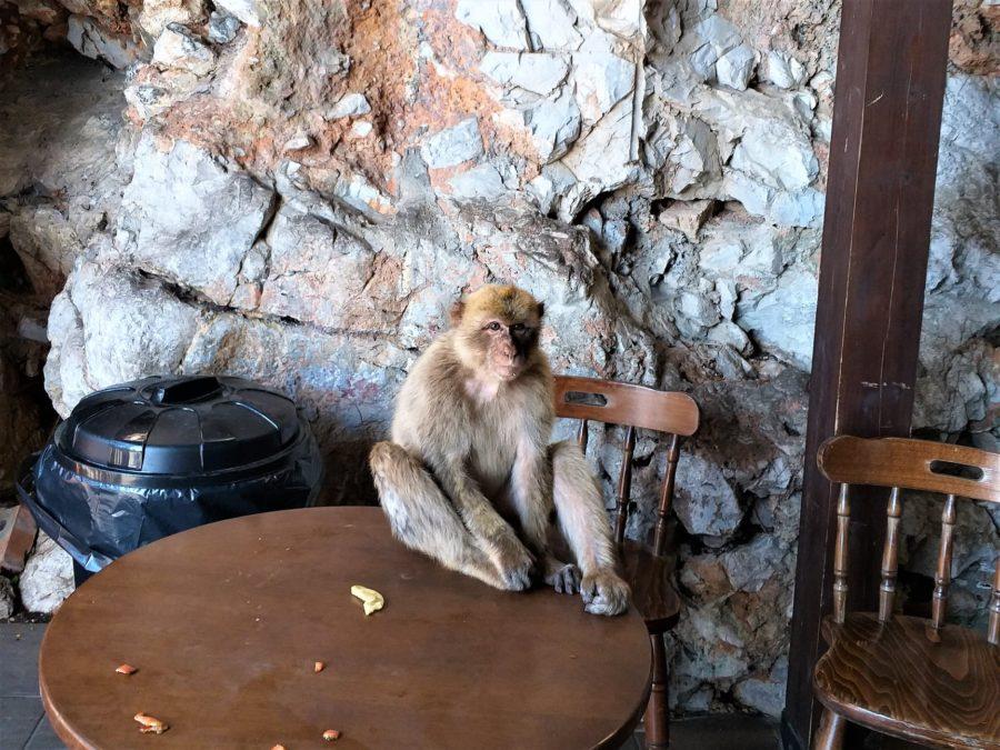 Mono en la cueva de San Miguel