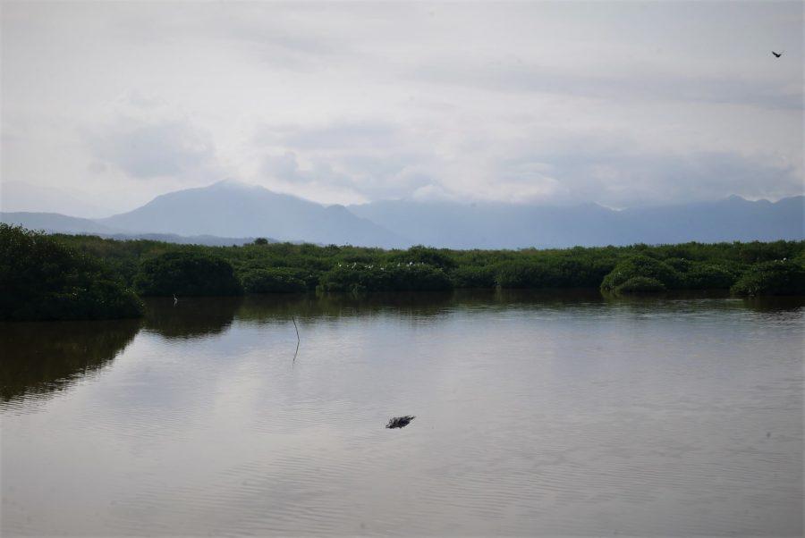 Cocodrilos en San Blas