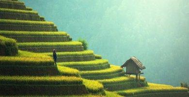 Soñar con agricultura