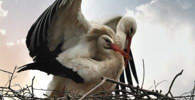 soñar con nido