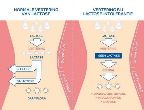 Wat is Lactose Intolerantie?