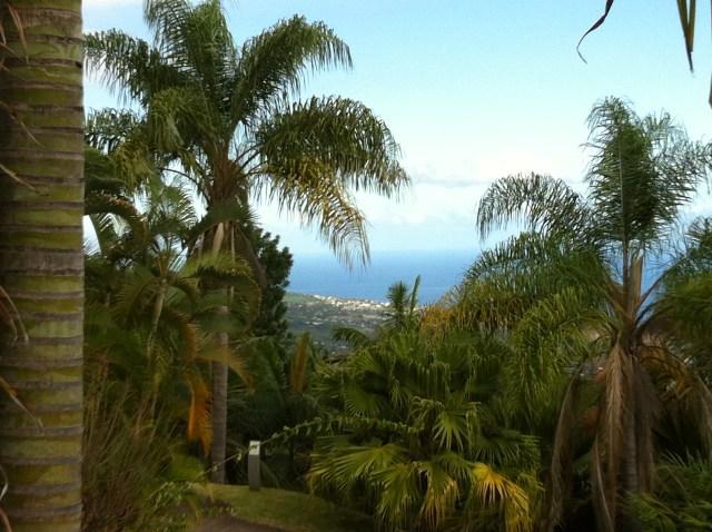 Ile de la Réunion, vue du Jardin Botanique