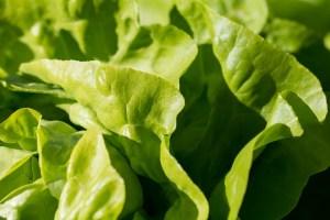 salade aliments pas mettre frigo