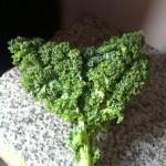 kale sauce aigre-douce 1