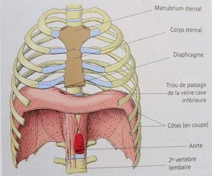 'Le Roi Diaphragme'