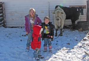 Siobhan, Maeve and McCoy with Salt and Pepper--Siobhan's 4-H steers