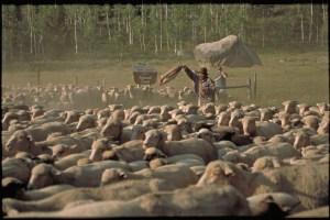 Pepe and Brian moving sheep, HInman Fire, 2002 photo by Keri Greet