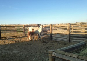 Coco with her new colt.  I must be spring!
